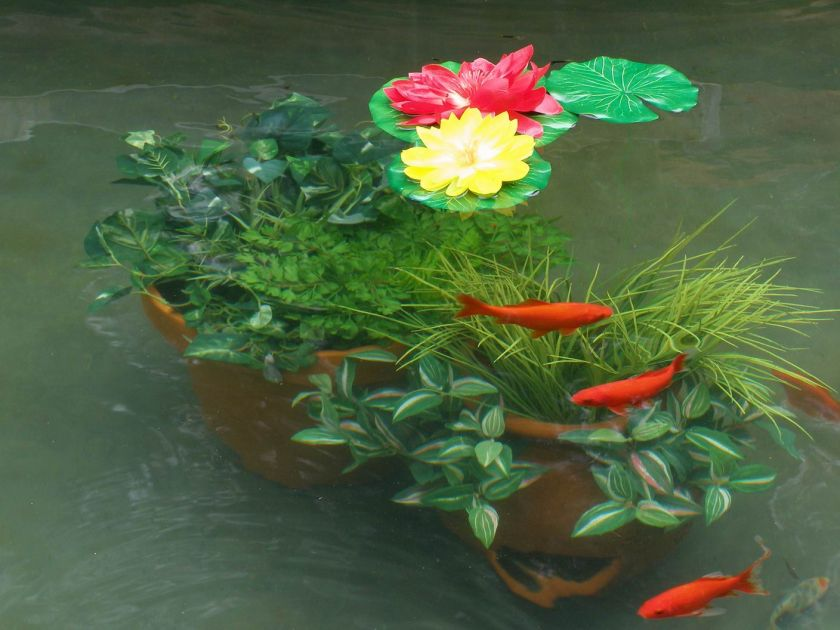 Green out koi ponds cleaning water treatment gal Green fish pond water